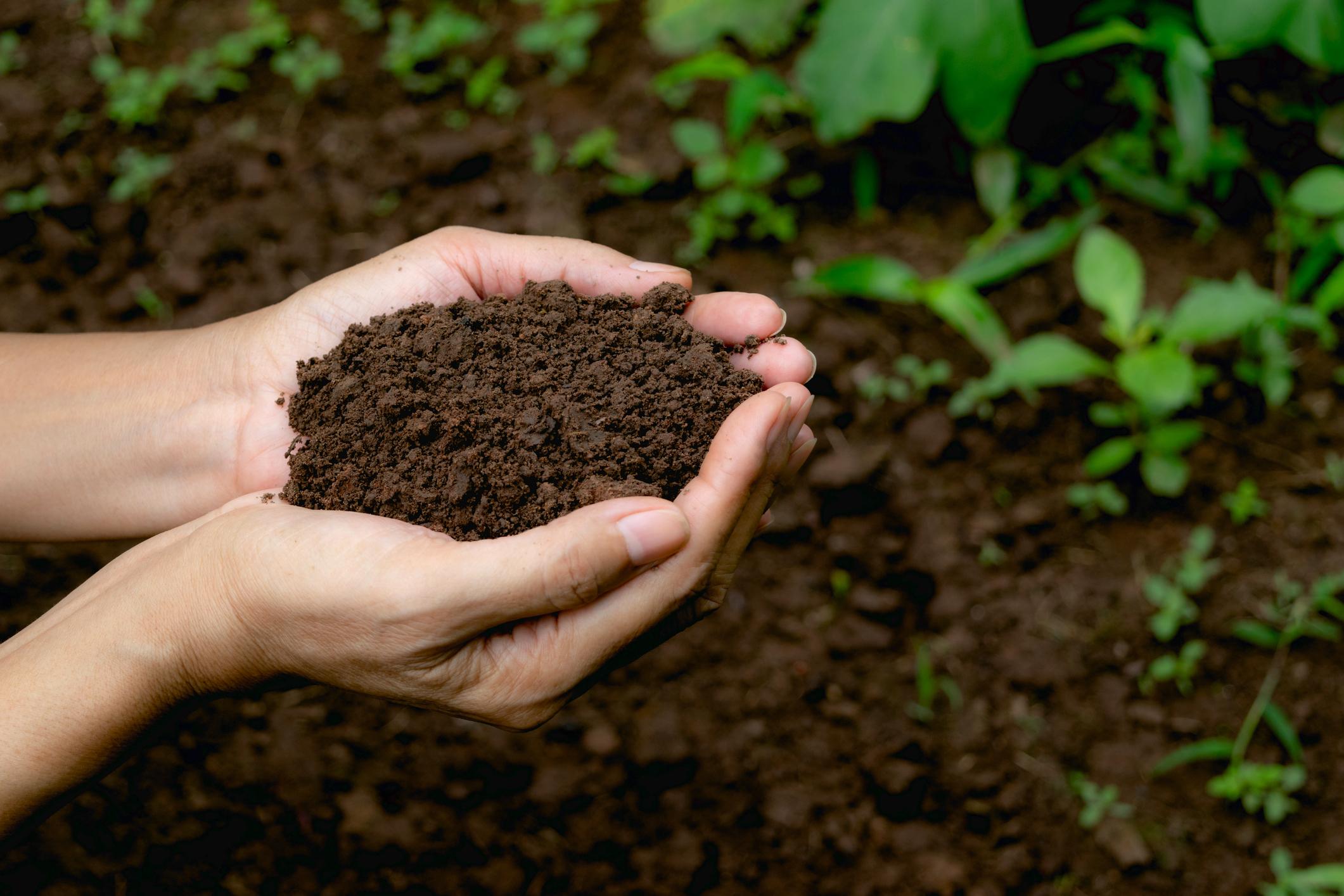 Black soils